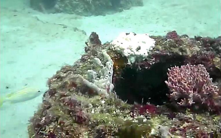 Eternal-Reefs-7-11-2011_020-11