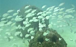 Eternal-Reefs-7-11-2011_041-11