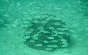 Eternal-Reefs-Miami-Ft-Lauderdale-2-12-043