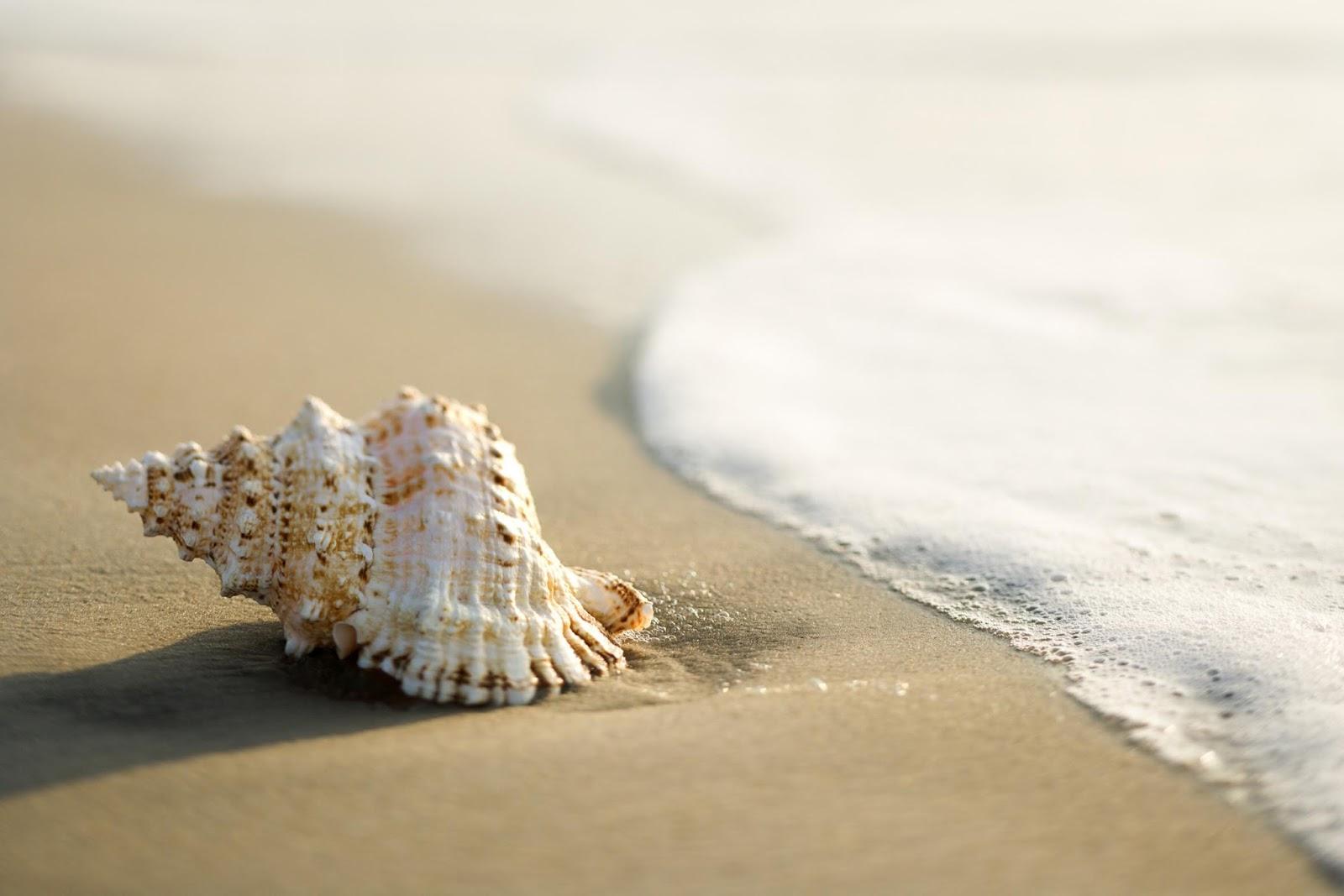 caracola en la arena